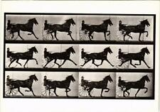 CPM EM24 Horse With Sulky, Trotting 1887 EADWEARD MUYBRIDGE (d1252)
