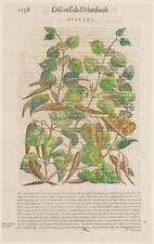 MATTIOLI MATTHIOLI APOCINO WOODSON FITOTERAPIA 1568 OMEOPATIA BOTANICA ORIGINALE