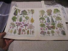 Ancienne Gravure Pédagogique d'Encyclopédie les Arbres de Parc Jardin Forêt Bois