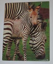 Zebras Magnet Mother Baby Fridge Stripes Black White New Realistic Wild Animals