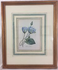 Blue Water Lily 1880s Color Lithograph Professionally Framed Nymphaea caerulea
