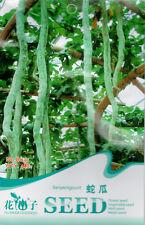 Original Package 4 Serpent Gourd Seeds Trichosanthes Snake Gourd B035