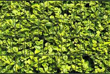 Sichtschutzstreifen Zaun Doppelstabmatten 2. Wahl Buxus Buchsbaum mit Klemmen