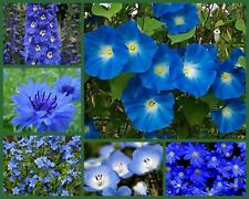 """I've Got the Blues"" Blue Flowers Special, 6 Full Size Packs, Blue Flower Seeds!"