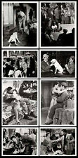 BULL TERRIER/JARMA LEWIS original 1955 movie lobby photos IT'S A DOG'S LIFE