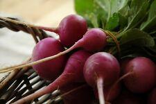 Radish Seeds- Purple Plum Heirloom- 300+ 2019 Seeds     $1.69 Max Shipping/order