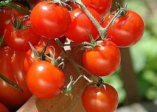 25 Graines de Tomate Cerise Rouge Non Traité seeds plantes légumes potager