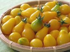 TOMATO,YELLOW PEAR TOMATO SEED, HEIRLOOM, ORGANIC, NON-GMO, 25+ SEEDS, TASTY