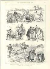 1890 Checking Potato Disease In Ireland Burning Stalks M Sainton Violinist
