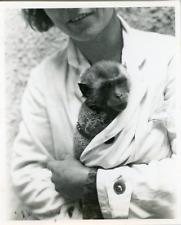 Portrait de petit singe, 1930 Vintage silver print Tirage argentique  8x11