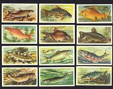 CIGARETTE/TRADE/CARDS. Brooke Bond Tea. FRESHWATER FISH. (1960). (Complete Set).