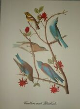 VINTAGE WARBLERS AND BLUEBIRDS 10 X 12 PRINT