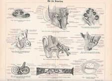 OHR Ohrenheilkunde Mittelohr Innenohr HOLZSTICH von 1897 Trommelfell Schnecke