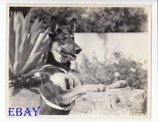 Rin-Tin-Tin VINTAGE Photo