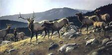 High Country Elk by Nancy Glazier Elk Print 34x17
