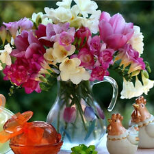 100Pcs Mixed Freesia Bulb Perfume Flower Seeds Garden Perennial Plant Decoration