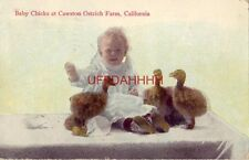 1915 BABY CHICKS (with real baby) AT CAWSTON OSTRICH FARM, CALIFORNIA