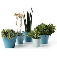 Sophie Conran Set di 5 verde mare sfumati piante vasi da Burgon & Ball.