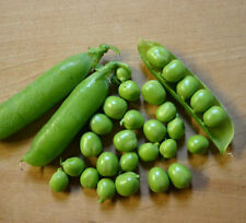 Pea Seeds - CASCADIA SNAP PEAS - Deep Green, Sweet & Juicy- ORGANIC - 50 Seeds
