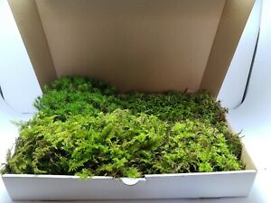35×25cm, Moos, 4 Sorten, Bodengrund, Terrarium Pflanzen, Bastel Moos, Deko Moos
