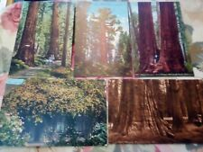 5 TREE CARDS SAN FRANCISCO AMERICA EARLY 1900s EDWARD H MITCHELL, SEPIA/HAND COL