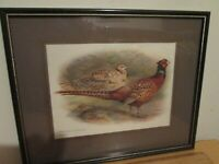 Art Phasianus Colchicus Pheasant Wildlife Art by C U Shymhen? Matted Bromley Art