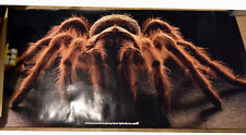 "60"" 1990 Print Poster Huge Tarantula Spider Golf Advertising SpiderArc"