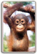 Baby Orangutan Cute Fridge Magnet 01