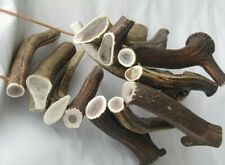 More details for one piece of natural deer antlers size xxl  ( buy 3 get 1 free )