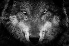 Wolf Drawing - Black And White Animal Wall Art Large Poster & Canvas Pictures