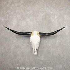 #22185 E+ | Longhorn Steer Skull European Taxidermy Mount For Sale