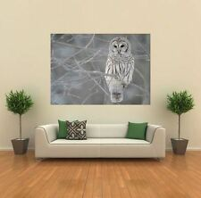 GREY SNOWY OWL IN A TREE  NEW GIANT POSTER WALL ART PRINT PICTURE X1351
