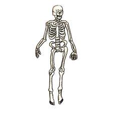 ID 0884 Human Skeleton Anatomical Halloween Bone Display Iron On Applique Patch