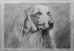 Original art work drawing art pencil sketch lovely dog