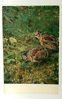 Bruno Liljefors Wildlife Painter Eurasian Woodcocks Gothenburg Museum Postcard