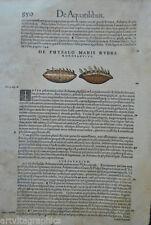 Original vor 1800 Grafik & Drucke mit Zoologie und Holzschnitt