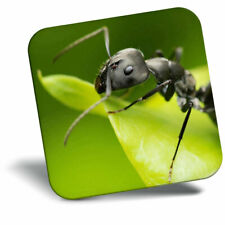 Awesome Fridge Magnet - Black Ant Insect Wildlife Cool Gift #8891