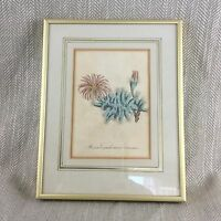 1814 Antico Stampa con Cornice Botanico Mano Colorato Incisione Originale Curtis