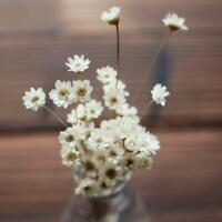 1 Bunch Dried Daisy Flowers Mini Daisies Floral Bouquet Wedding Party Home Decor