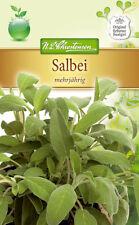 Salbei - Salvia officinalis,  ca. 70 Samen, 4979