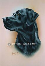 Black Labrador Retriever Print by Robert J. May
