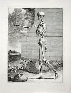 Ravenet: Anatomische Studie eines gehenden Skeletts. 1747. Original-Kupferstich.