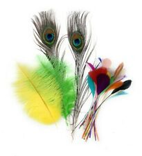 24 Mixed Feathers Pack Arts Card Wedding Craft Burlesque Peacock Ostrich Coque
