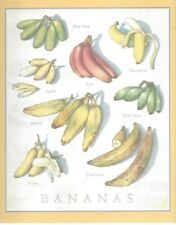Cooks Illustrated  BACK COVER ONLY  Framable  Art:  John Burgoyne:~ BANANAS