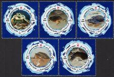 Oman 2019 Turtles Reptiles Marine Life 5v MNH**