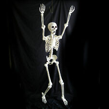 Pose & Hold Lifesize Human Skeleton 5' Haunted House Halloween Party Prop 63""
