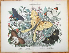 Zoological Atlas Large Print Insect Butterfly Plate 59 - 1890