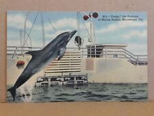 Linen Postcard ~ Pudgy the Porpoise at Marine Studios, Marineland ~ Unposted