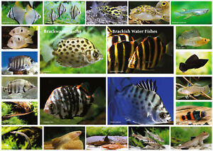 AQUALOG - Fold Poster Brackish Water Fishes
