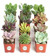 Unique Collection of Live Succulent Plants Collection of 12 Fertilizing New